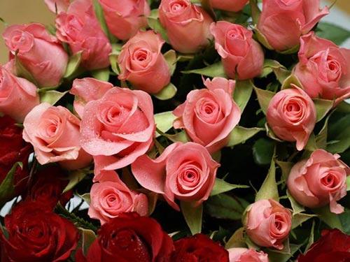 Как сохранить розы и другие срезанные цветы
