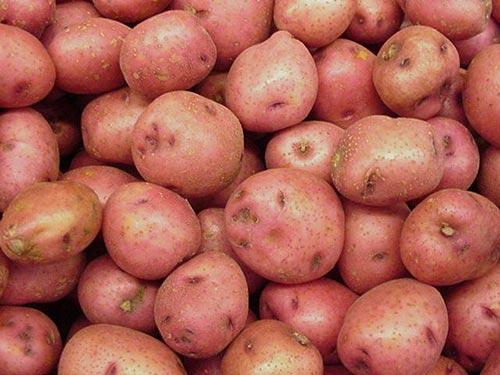 Болезни картофеля, их лечение и профилактика