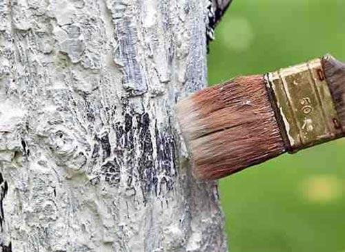 Подготовка подовых деревьев к зиме: осень весну кормит