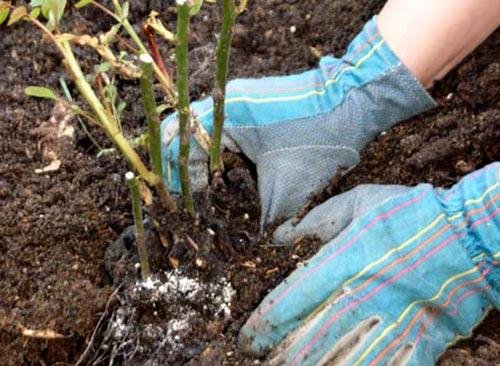 Посадка деревьев: учимся сажать плодовые и декоративные деревья правильно