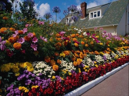 Создание клумб и цветников