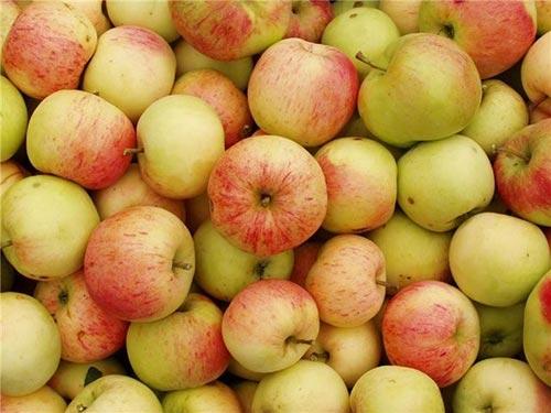 Хранение яблок после сбора урожая