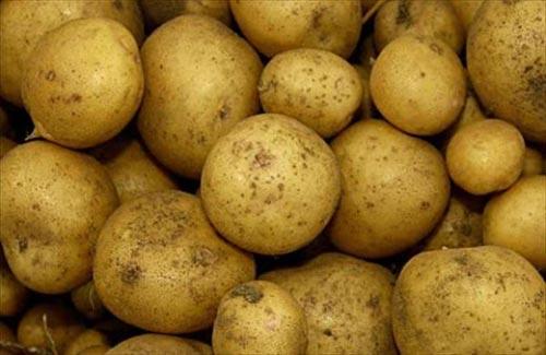 сорт картофеля невский описание и фото