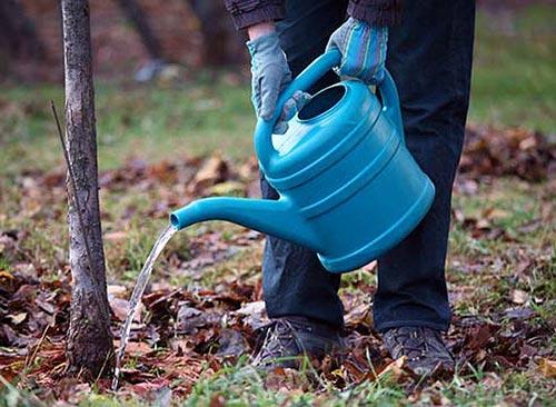 Правильный полив плодовых деревьев