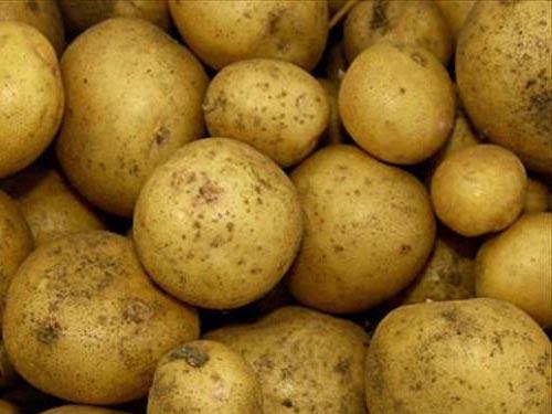 Уборка ранних сортов картофеля